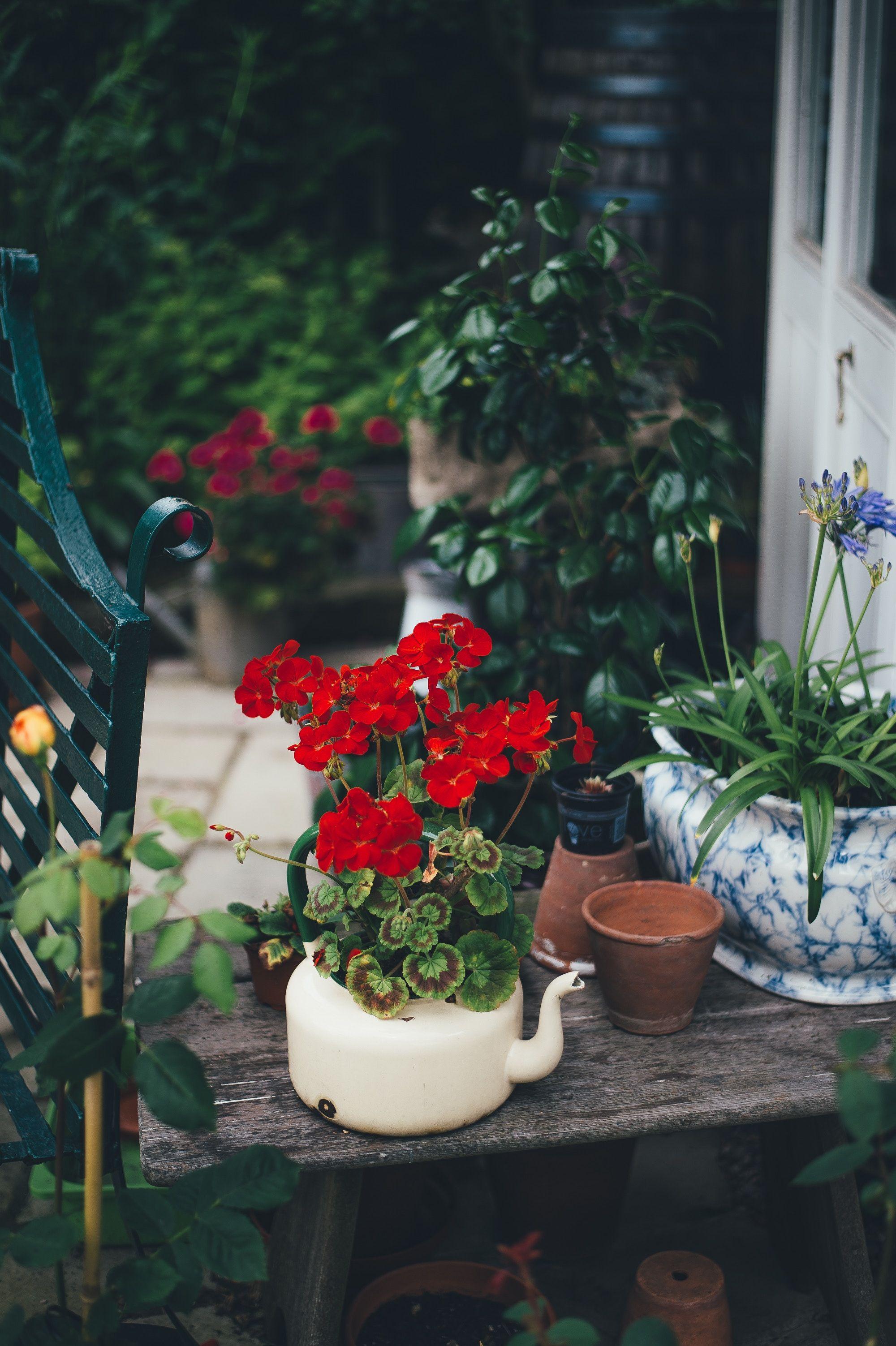 blomster-i-hage